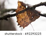 vintage dry leaf on the branch... | Shutterstock . vector #692293225