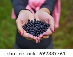 female hands holding heap of... | Shutterstock . vector #692339761