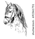 Stock photo horse head pencil drawing 692361751