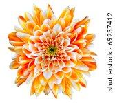 Stock photo single orange and white chrysanthemum flower isolated on white background beautiful dahlia 69237412