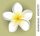 white plumeria  frangipani  | Shutterstock .eps vector #69243757