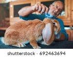 rabbit breeder combing his pet. ... | Shutterstock . vector #692463694