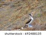 san cristobal island  galapagos ... | Shutterstock . vector #692488135