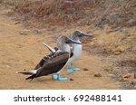 san cristobal island  galapagos ... | Shutterstock . vector #692488141