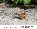 Brown Butterfly On The Ground...