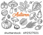 vector autumn hand drawn set of ... | Shutterstock .eps vector #692527021