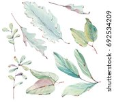 watercolor leaves collection.... | Shutterstock . vector #692534209