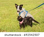 Stock photo black cat and a young dog in harness against green grass background 692542507