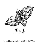 ink sketch of mint. isolated on ... | Shutterstock .eps vector #692549965