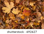Yellow Autumn Leaves On The...
