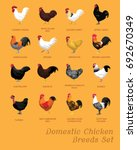 domestic chicken breeds set... | Shutterstock .eps vector #692670349