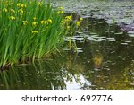 Yellow Irises And Water Lilies...