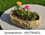 Flower Pot In Garden  Spring...