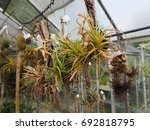 Epiphytes  Greenhouse Plants.