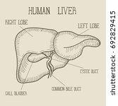sketch ink human liver  hand... | Shutterstock .eps vector #692829415