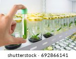 research herbal medicine at lab ... | Shutterstock . vector #692866141