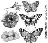 beautiful tropical  butterflies ... | Shutterstock . vector #692877391
