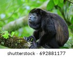 howler monkey | Shutterstock . vector #692881177