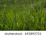 landscape. grass. background....   Shutterstock . vector #692892721