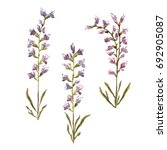 illustration watercolor field... | Shutterstock . vector #692905087