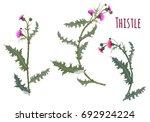 thistle   carduus  silybum ... | Shutterstock .eps vector #692924224