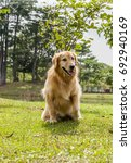 adorable golden retriever  dog... | Shutterstock . vector #692940169