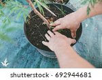 partial view of gardener... | Shutterstock . vector #692944681
