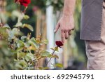 Stock photo selective focus of male hand touching red rose in garden 692945791