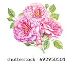 bouquet of roses  watercolor... | Shutterstock . vector #692950501