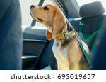Safety Of Dogs In The Car