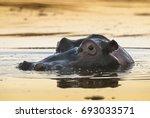 hippopotamus  kruger national... | Shutterstock . vector #693033571