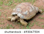 turtles in the midst of nature... | Shutterstock . vector #693067504