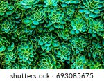 cactus green leaf photo on top  ... | Shutterstock . vector #693085675