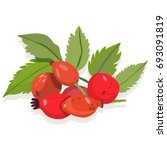vector illustration of rosehip... | Shutterstock .eps vector #693091819