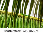 lizard on palm leaves tropical... | Shutterstock . vector #693107071