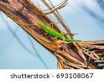 lizard tropical background sun... | Shutterstock . vector #693108067