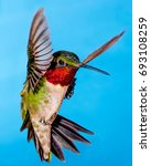 hummingbird close up.  male... | Shutterstock . vector #693108259
