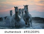 Sunset In Camargue  Horses On...