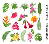 exotic tropical flowers and... | Shutterstock . vector #693154315