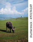 asian buffalo eating in the... | Shutterstock . vector #693156169