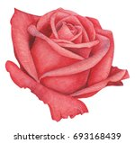 Hand Painted Watercolor Rose ...