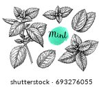 retro style ink sketch of mint. ... | Shutterstock .eps vector #693276055