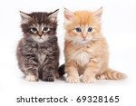 Stock photo siberian cat isolated on white 69328165