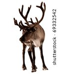 reindeer caribou isolated   Shutterstock . vector #69332542