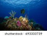 colorful underwater world in... | Shutterstock . vector #693333739