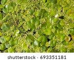Texture  Background  Vegetatio...