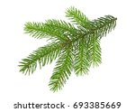 fir branch on white background | Shutterstock . vector #693385669