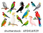 tropical parrot set with... | Shutterstock . vector #693416929