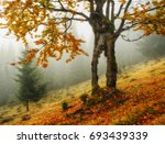 tree. autumn morning. misty... | Shutterstock . vector #693439339