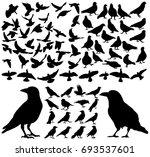 vector  isolated silhouette of... | Shutterstock .eps vector #693537601
